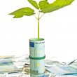 One plant growing from euro money — Stock Photo