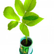 Green plant growing from euro money on white background — Stock Photo