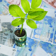 Green plant growing from euro bills — Stock Photo