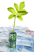Green sapling growing from euro banknotes — Stock Photo