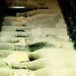 Stock Photo: A lot of old champagne bottles covered with dust
