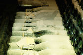 A lot of old champagne bottles covered with dust — Stock Photo