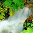 Flowing water in the forest — Stock Photo