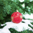 Christmas ball and green fir — Stock Photo