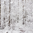 Stock Photo: Forest covert in winter