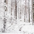 Stock Photo: December forest
