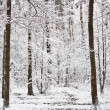 Trunks of trees in winter forest — Stock Photo