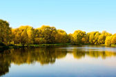 Autumn landscape of pond and trees — Stok fotoğraf
