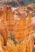 Parco nazionale del bryce canyon in utah, usa — Foto Stock