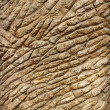 Stock Photo: Ribbed brown stone