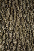 Tree Bark texture — Stockfoto