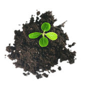 Gentle green plant in soil isolated, top view — Stock Photo