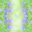 Beautiful summer background with campanula bouquet. — Stock Photo