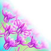Magenta Colored Columbine Flowers — Stock Photo