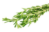 Fresh rosemary isolated on white — Stock Photo
