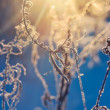 Plants in frost — Stock Photo