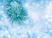 Pine branches covered with hoarfrost. Blue blurred background wi — Stock fotografie