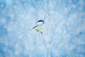 Snow-covered branches and small bird — Stock Photo