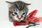 Little gray tabby kitten with a red bow — Stock Photo