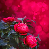Red camellia bouquet of flowers — Foto Stock