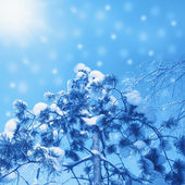 Snow-covered pine tree on blue sky background — Stock Photo