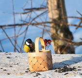 Tit on a manger in a park eating seeds and nuts — Stock Photo