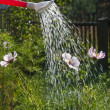 Watering of flowers on bed of watering can — Stock Photo #38478013