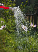 Watering of flowers on a bed of a watering can — Stock Photo