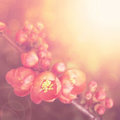 Beautiful spring flowering decorative quince. — Stock Photo