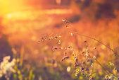 Grass, illuminated by the sun — Stock Photo