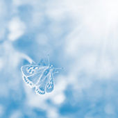 Butterfly Sunlight on blurred blue background. — Stock Photo