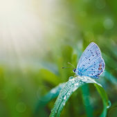 Butterfly on meadow — Stock Photo