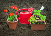 Seedlings potted plants and watering can — Stock Photo