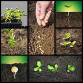 Spring planting seeds and seedlings into the soil — Foto de Stock