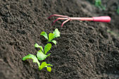 Green seedling growing out of soil — Stock Photo