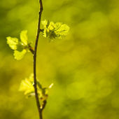 Branch with green — Stock Photo