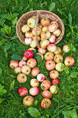 Apples on grass — Stock Photo