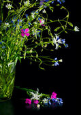 Bouquet of wild flowers on a black background. — Stock Photo