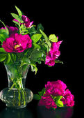 Beautiful flowers wild rose in a vase on a black — Stock Photo