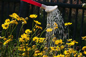 Watering the flowers in the flowerbed.  — Stock Photo