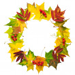 Wreath of autumn leaves isolated on white — Stock Photo #49066745