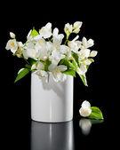 Bouquet de fleurs de jasmin sur un fond noir — Photo