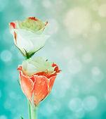 Eustoma λουλούδια σε θολή φόντο με bokeh. — Φωτογραφία Αρχείου
