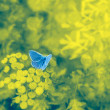 Blue butterfly on a floral background with bokeh — Stock Photo #50893153