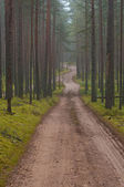 Road in the pine forest in the morning mist — Stockfoto