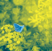 Blue butterfly on a floral background with bokeh — Stockfoto