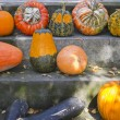 Harvested pumpkins — Stock Photo