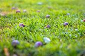 Violeta e roxo ameixa na grama verde — Fotografia Stock