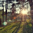Summer forest at sunset — Stock Photo