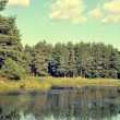 Stock Photo: Forest and lake scenery